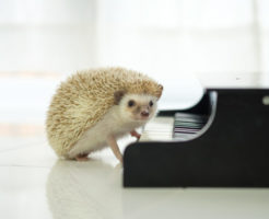 無料音楽素材を作曲するハリネズミ